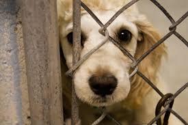 Stop animal cruelty | 21st Century Citizenship